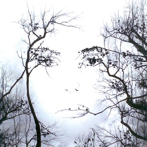 Seeing faces in the trees
